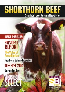 Shorthorn_Beef_Autumn_Newsletter