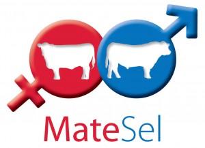 MateSelLogo