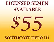 Southcote Hero